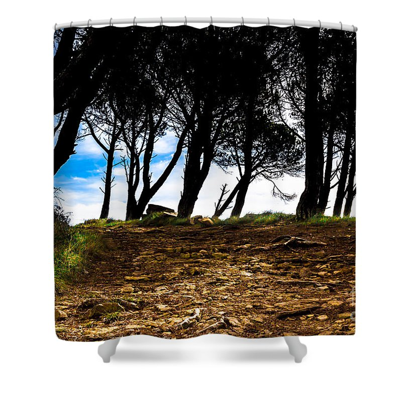 Forest Shower Curtain featuring the photograph Mystery Of The Forest by Edgar Laureano