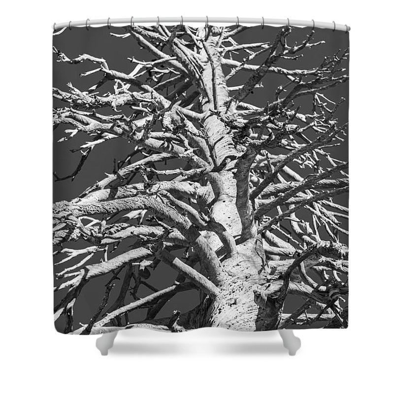 Pine Shower Curtain featuring the photograph Naked And Barren by Scott Campbell