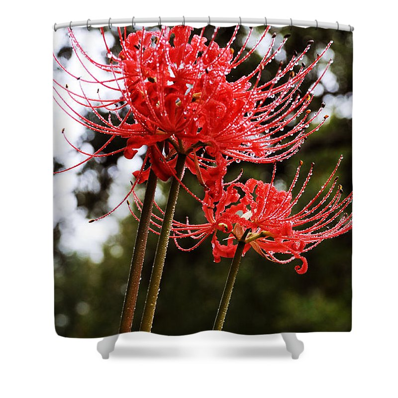 Flowers Shower Curtain featuring the photograph Naked Ladies by Leon Hollins III