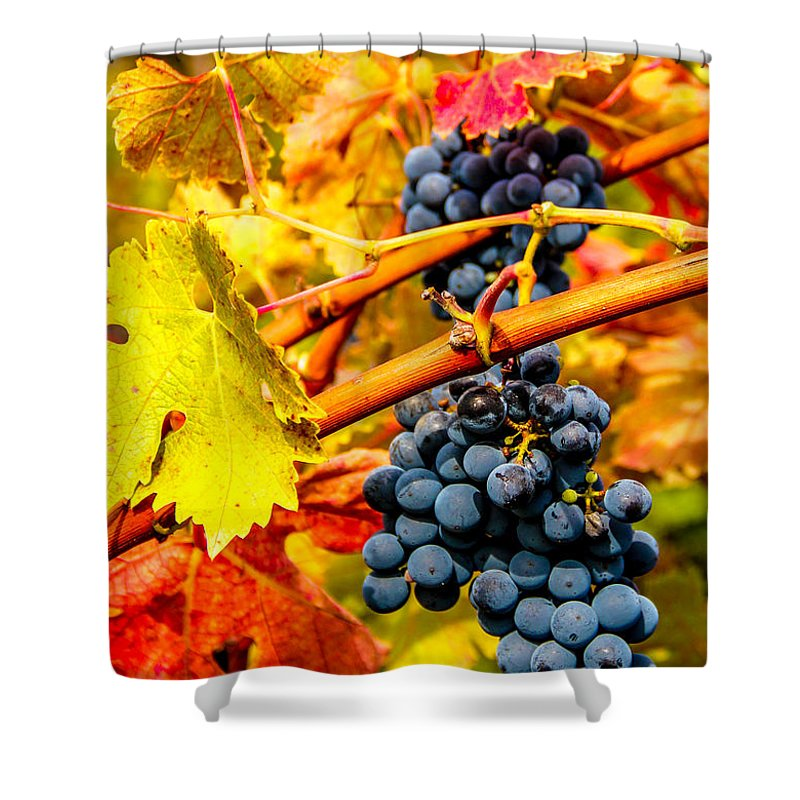 Autumn Shower Curtain featuring the photograph Napa Valley Grapes, California by Tirza Roring