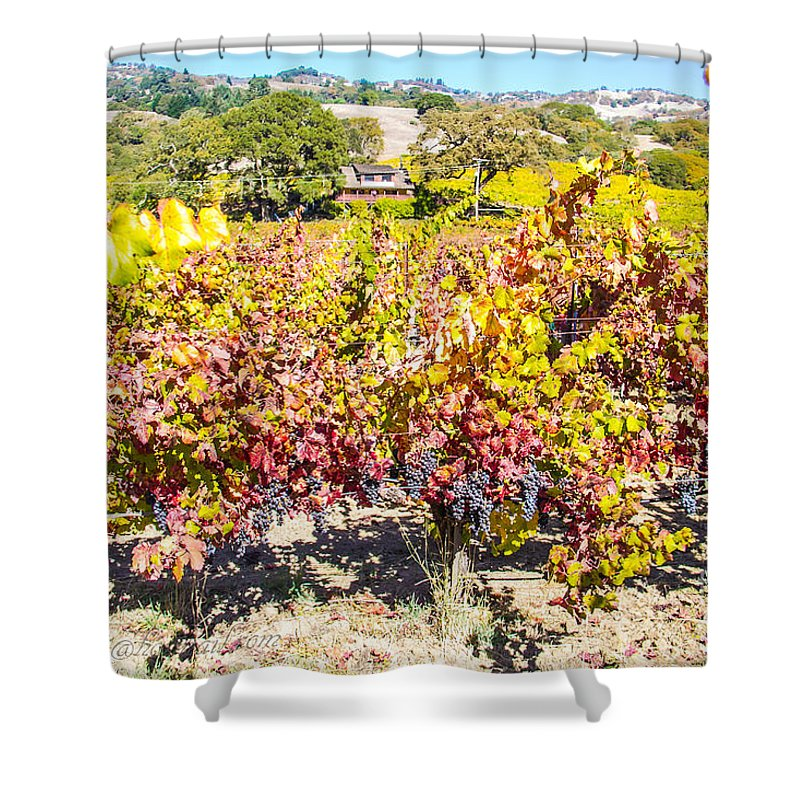 Wine Grapes Shower Curtain featuring the photograph Napa Valleys Best by Brian Williamson