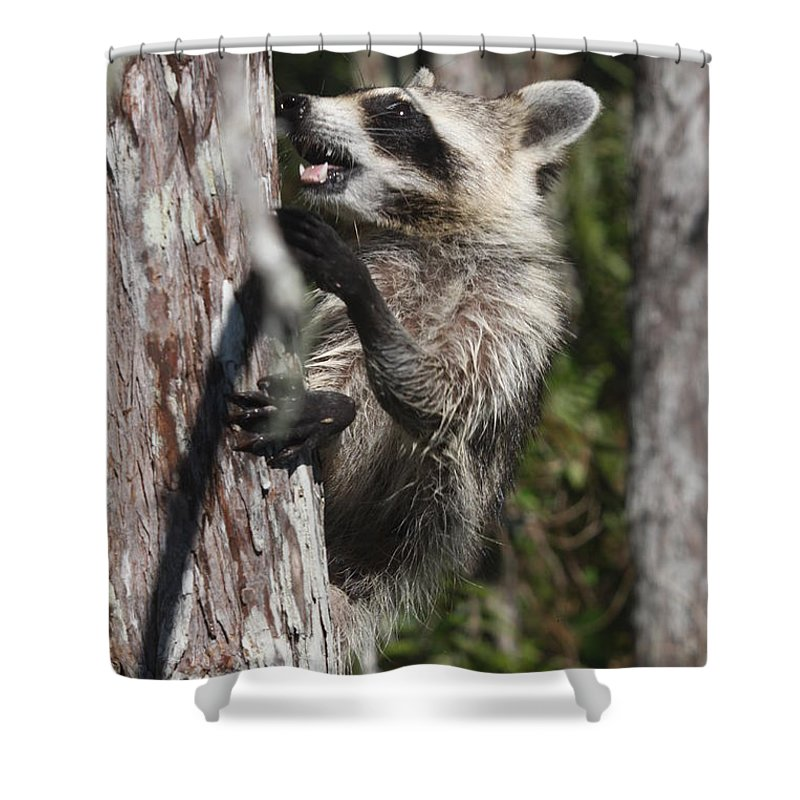 Raccoon Shower Curtain featuring the photograph Nasty Raccoon In A Tree by Christiane Schulze Art And Photography
