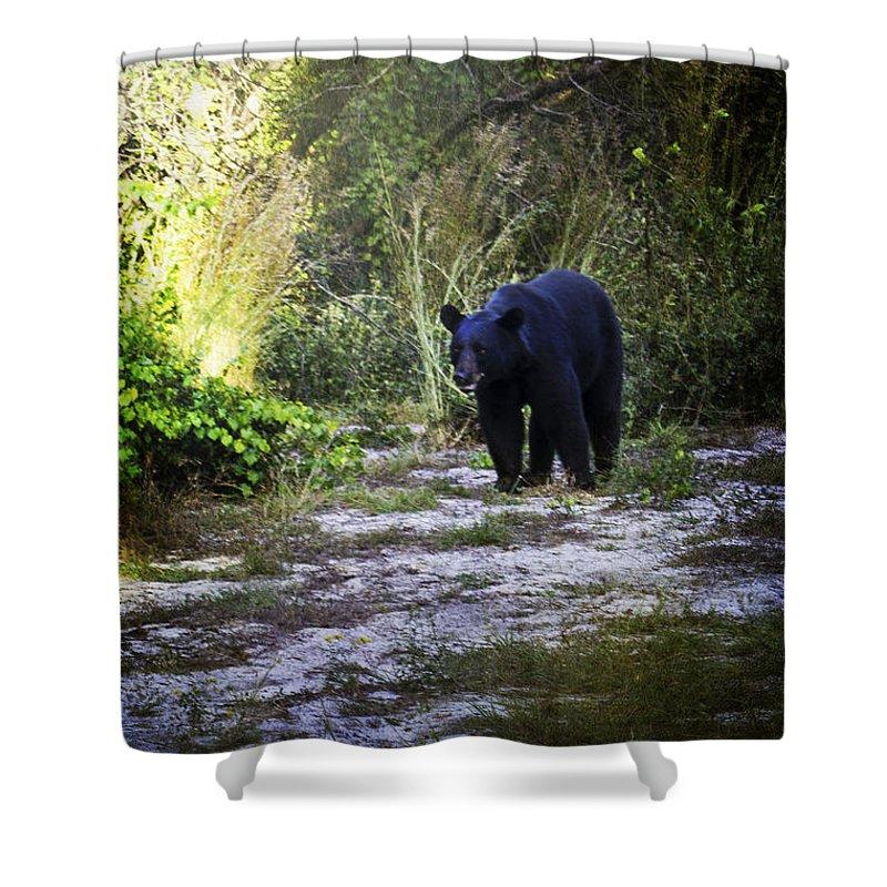 Bear Shower Curtain featuring the photograph National Forest Bear by Judy Hall-Folde