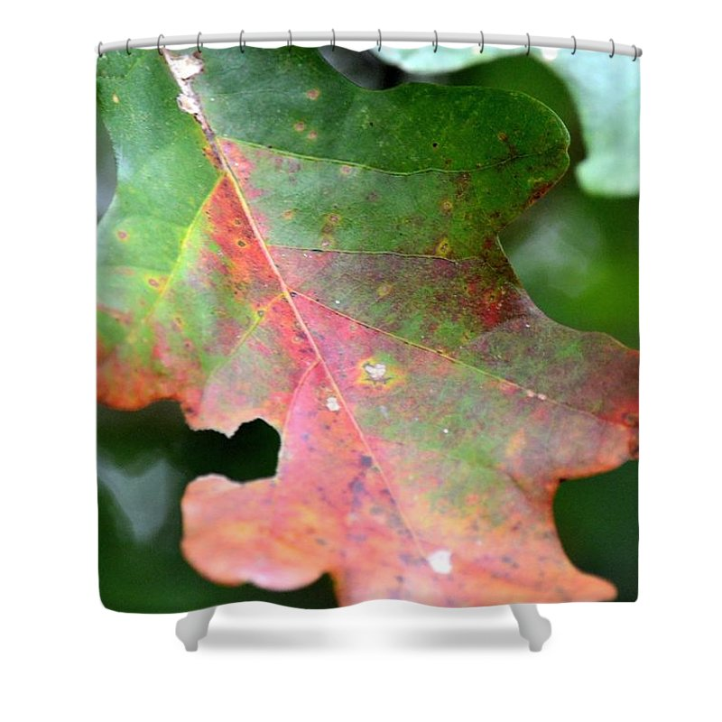 Natural Oak Leaf Abstract Shower Curtain featuring the photograph Natural Oak Leaf Abstract by Maria Urso