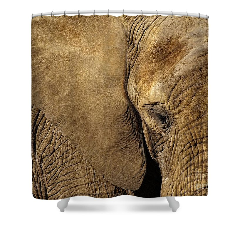 Animal Shower Curtain featuring the photograph Natural Sepia by Brothers Beerens