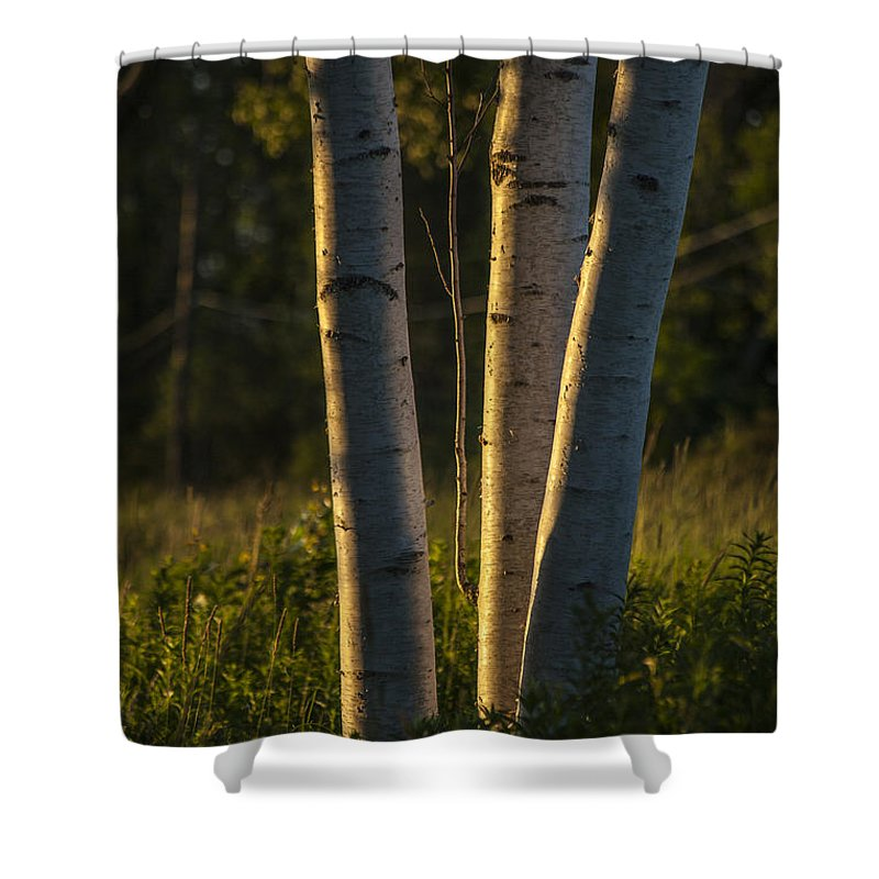Nature Shower Curtain featuring the photograph Natures Glow by Karol Livote
