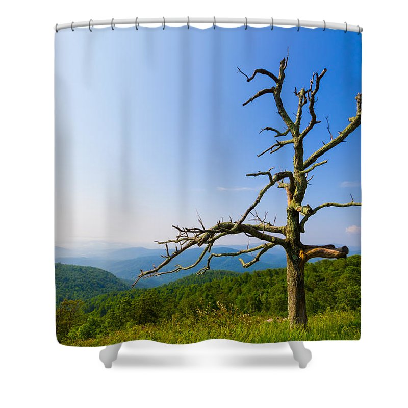 Tree Shower Curtain featuring the photograph Nature's Sculpture by Gaurav Singh