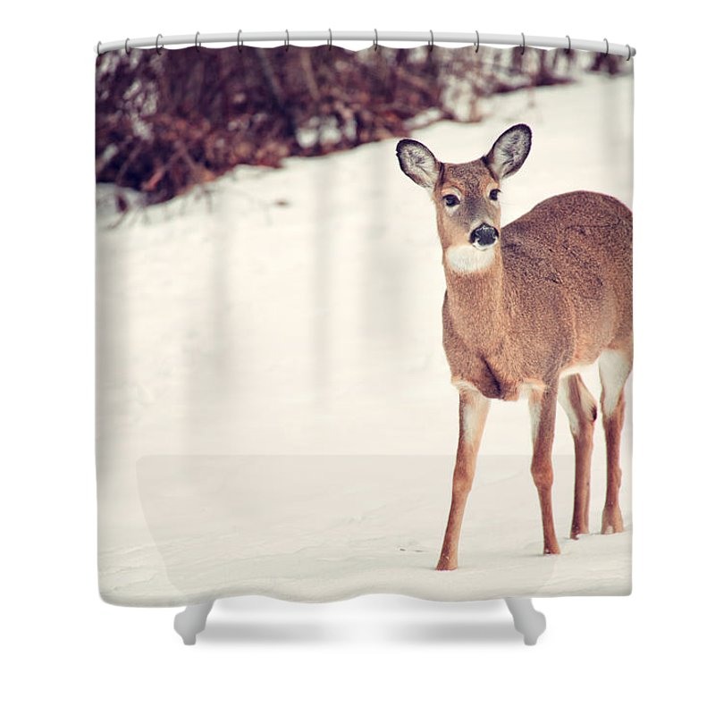 Natures Winter Visit Shower Curtain featuring the photograph Natures Winter Visit by Karol Livote