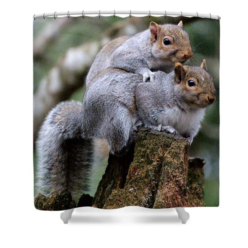 Animals Shower Curtain Featuring The Photograph Fifty Shades Of Gray Squirrel By Kym Backland