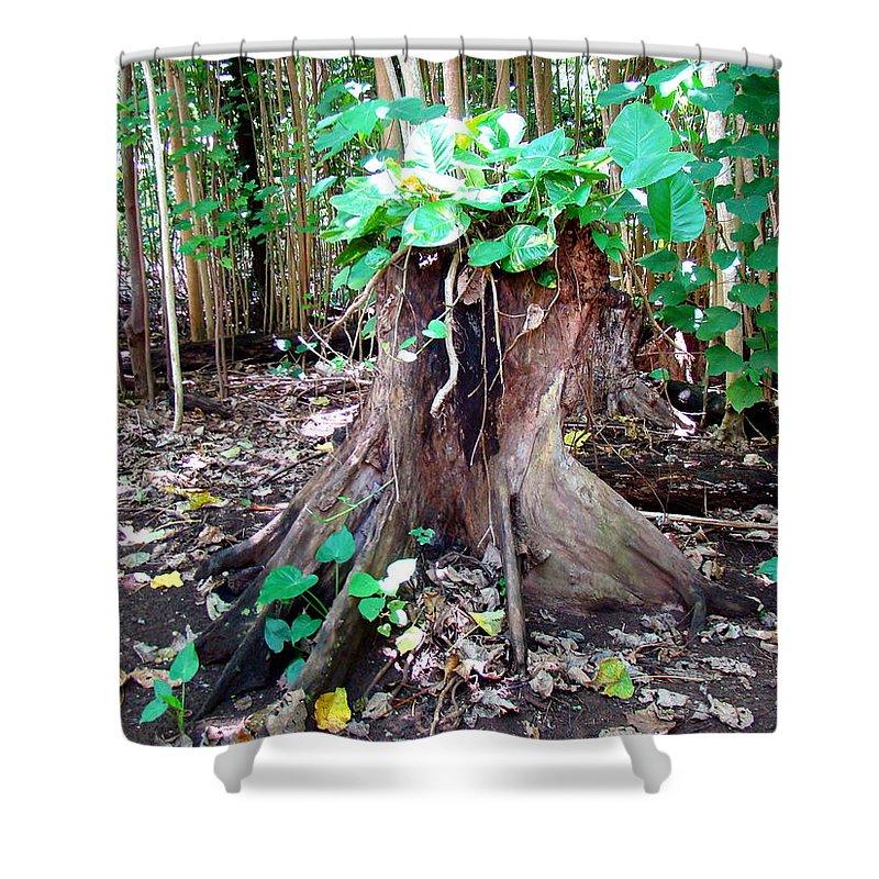 Kauai Shower Curtain featuring the photograph New Emerging Growth by Melinda Baugh
