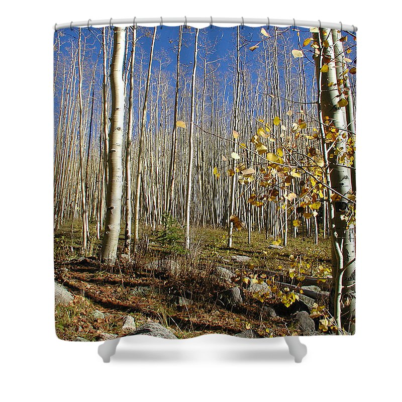 Landscape Shower Curtain featuring the photograph New Mexico Series - Bare Autumn by Kathleen Grace