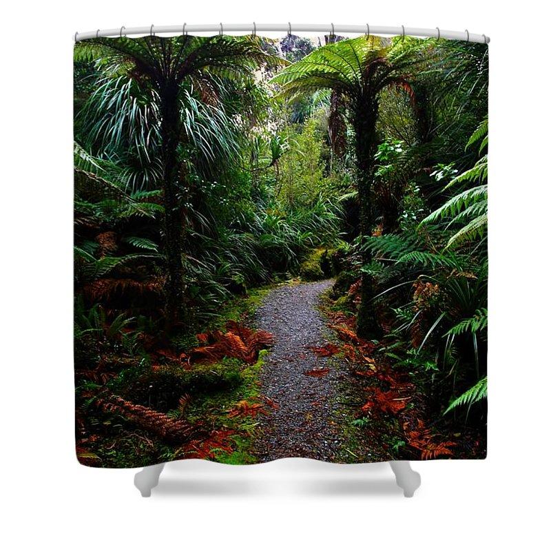 Rainforest Walk Shower Curtain featuring the photograph New Zealand Rainforest by Amanda Stadther