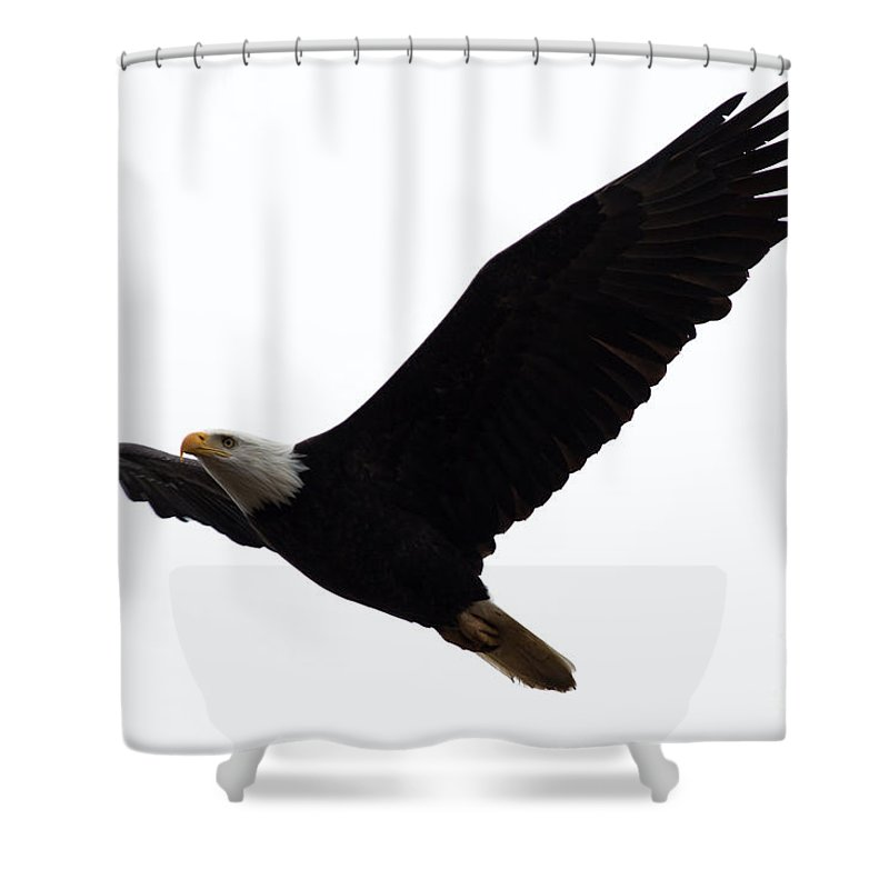 Bald Eagle Shower Curtain featuring the photograph Nisqually Eagle 2 by John Daly