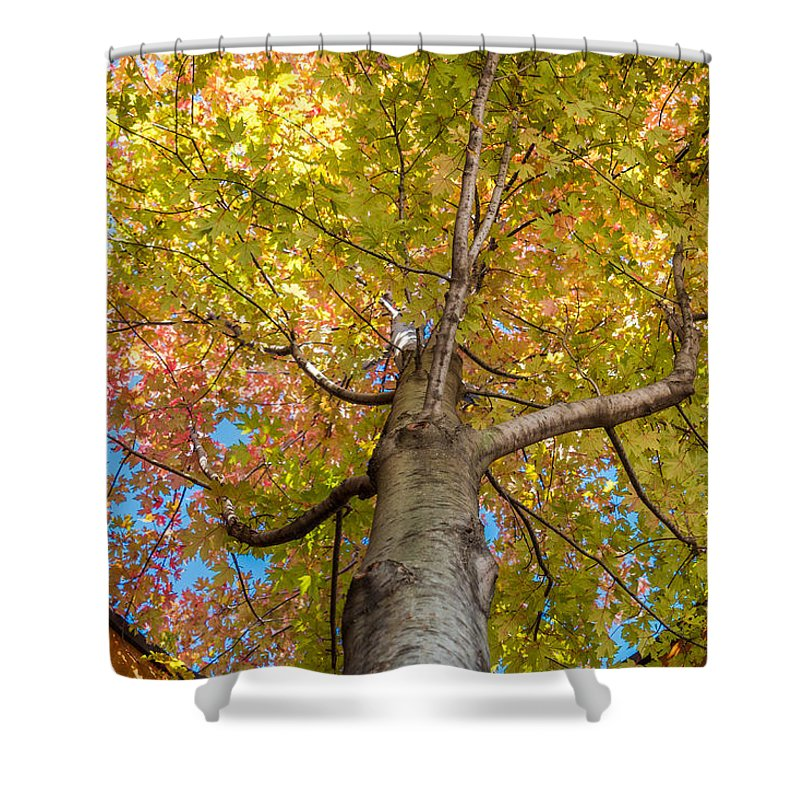 Tree Shower Curtain featuring the photograph Through The Roof by Patti Deters