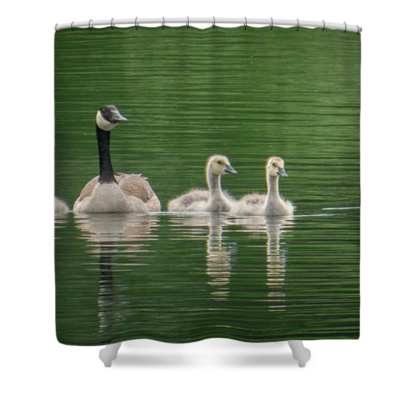 Geese Shower Curtain featuring the photograph Geese Family by Patti Deters