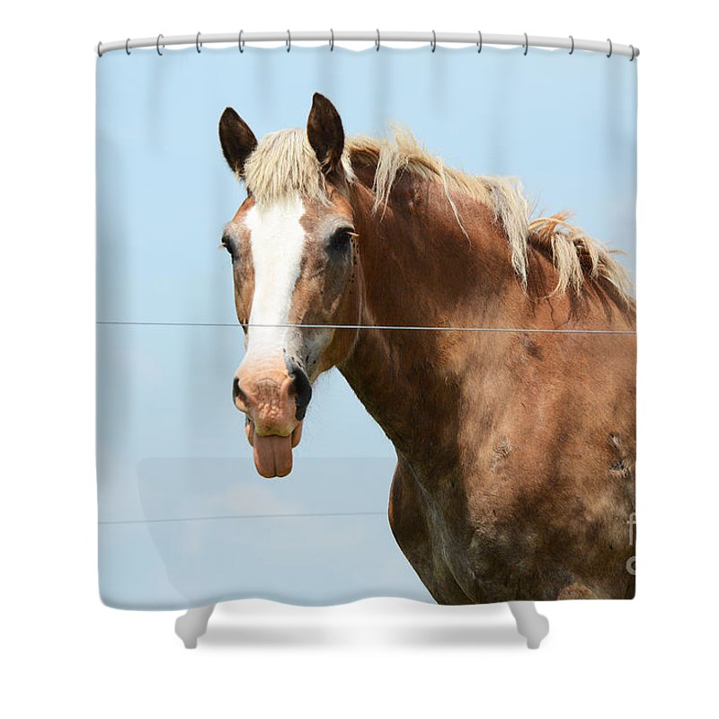 Horse Shower Curtain featuring the photograph No Manners by Cindy Manero