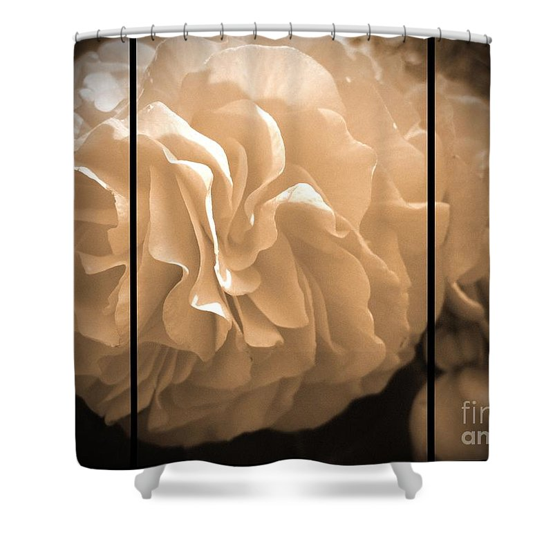 Begonia Shower Curtain featuring the photograph Non-stop Begonia Triptych by J McCombie