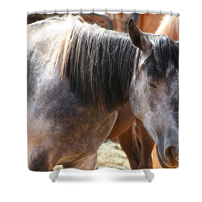 Horse Shower Curtain featuring the photograph Noon Nap by Susan Herber