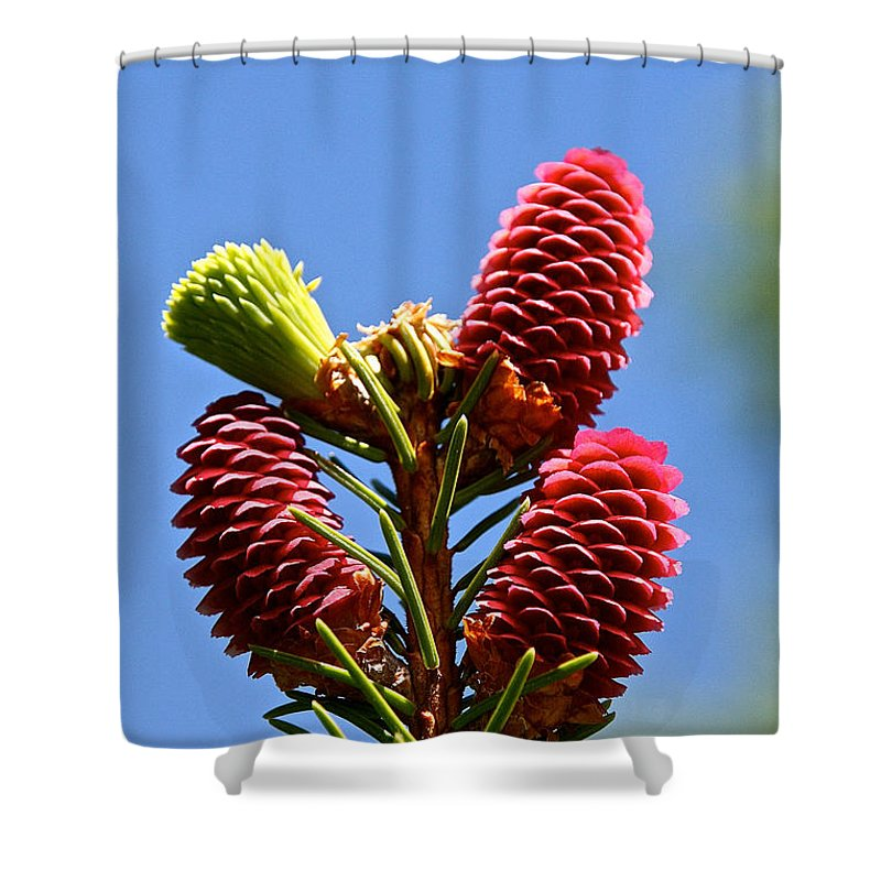 Tree Shower Curtain featuring the photograph Norway's Trifecta by Susan Herber