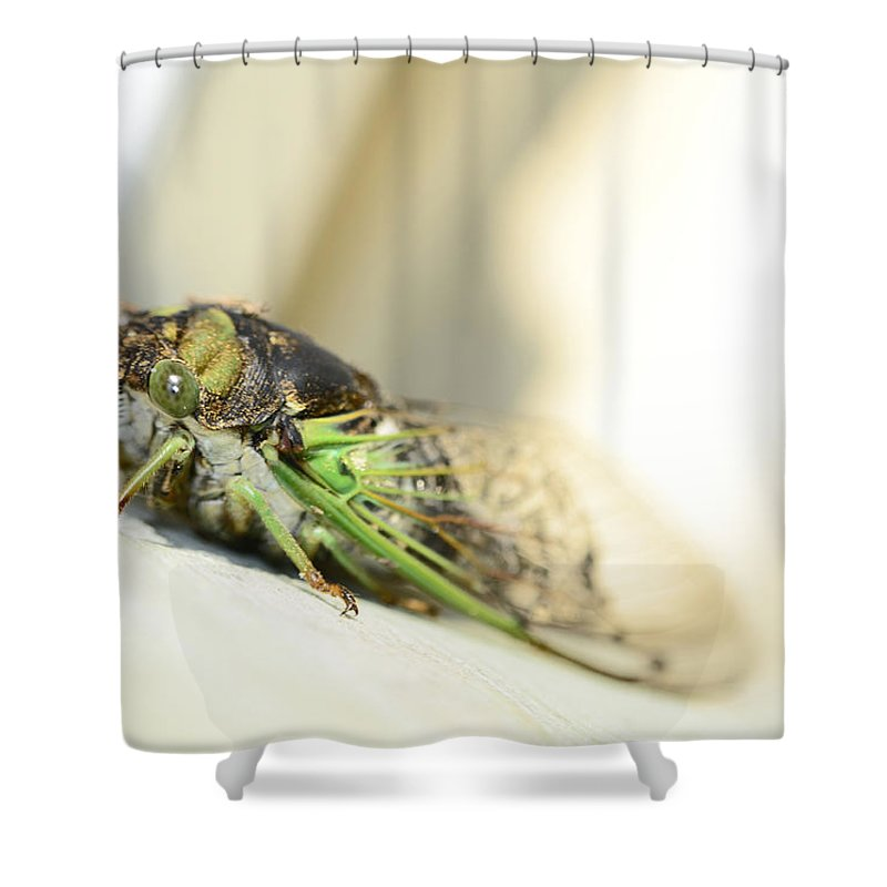 Cicada Shower Curtain featuring the photograph Not A Cute Bug by Lori Tambakis