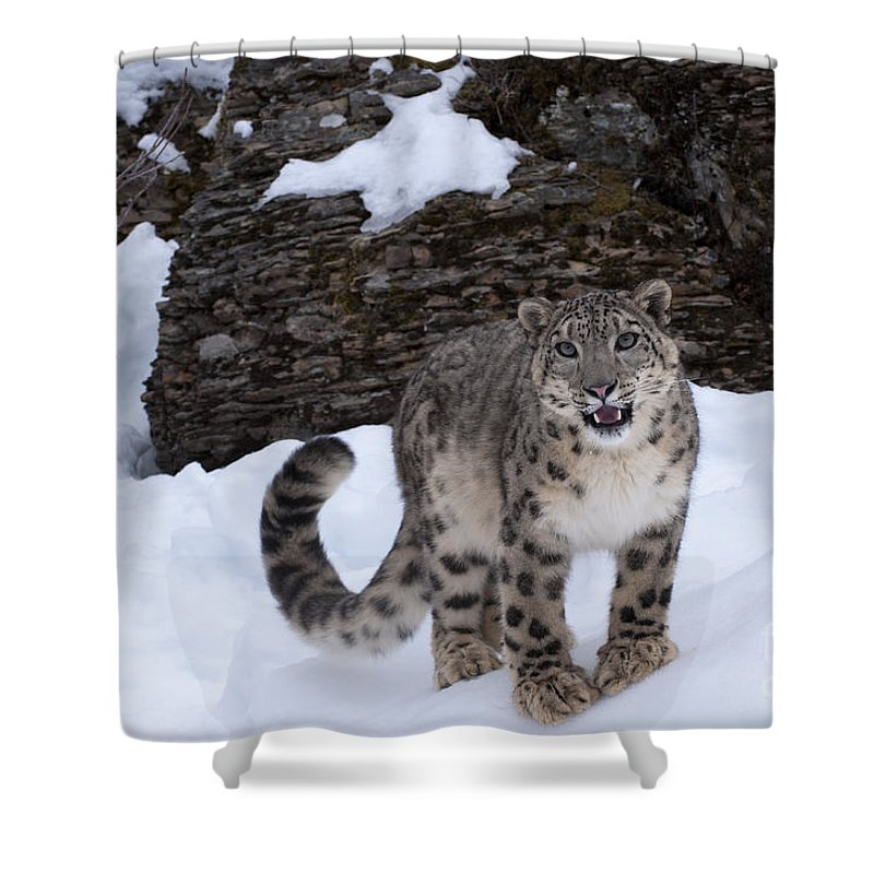 Snow Leopard Shower Curtain featuring the photograph Not Too Close - Please by Sandra Bronstein