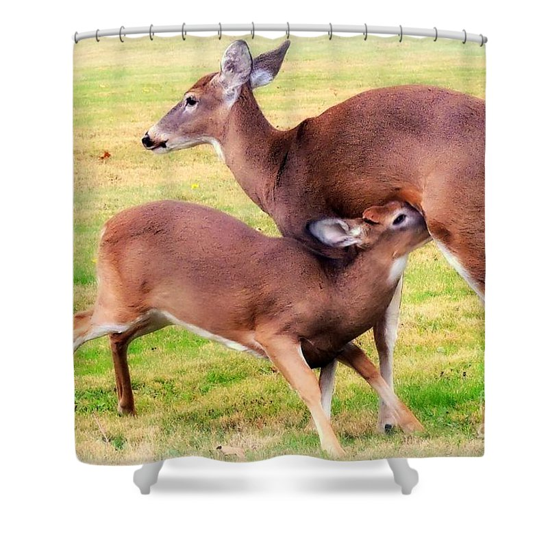 Deer Shower Curtain featuring the photograph Nurturing Nature by Tami Quigley