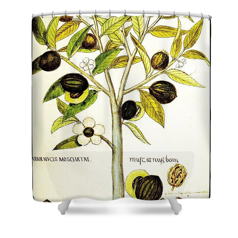 Nutmeg Shower Curtain Featuring The Drawing Plant Botanical By Rose Santuci Sofranko