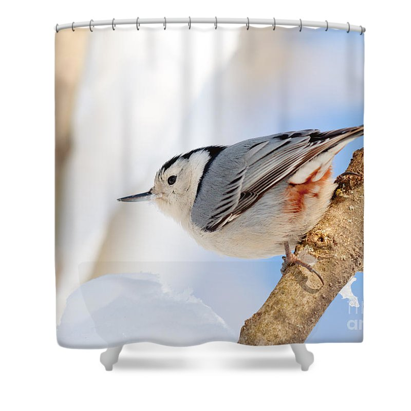 Landscapes Shower Curtain featuring the photograph Nutty Nuthatch by Cheryl Baxter