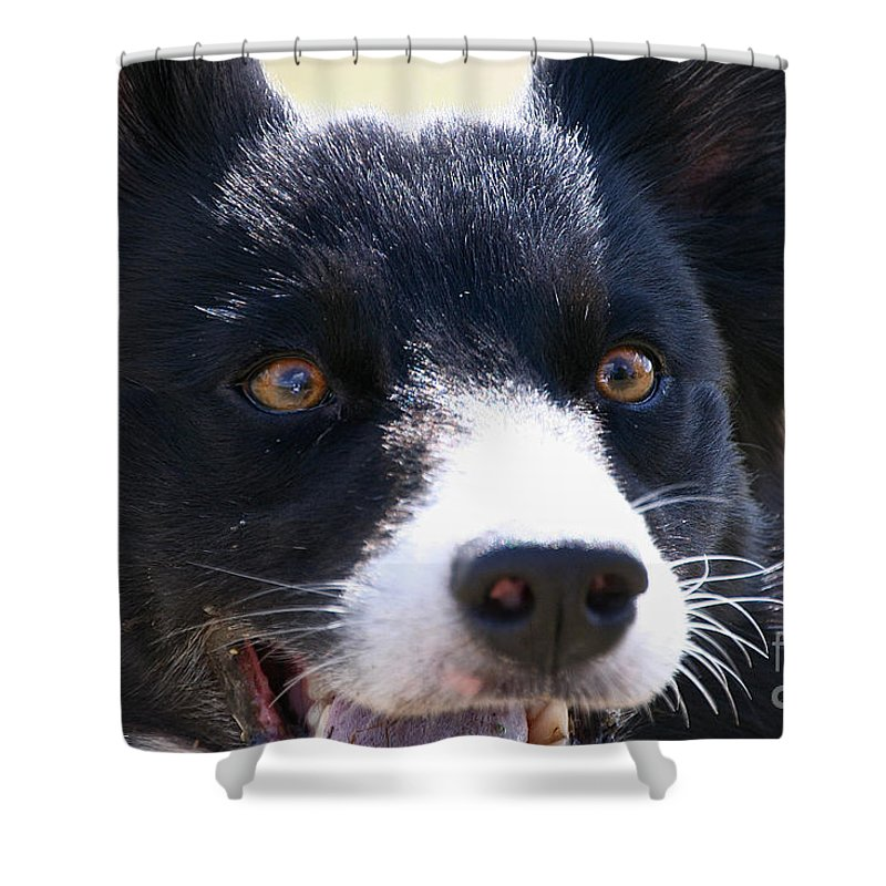 Dog Shower Curtain featuring the photograph O Happy Day by Susan Herber