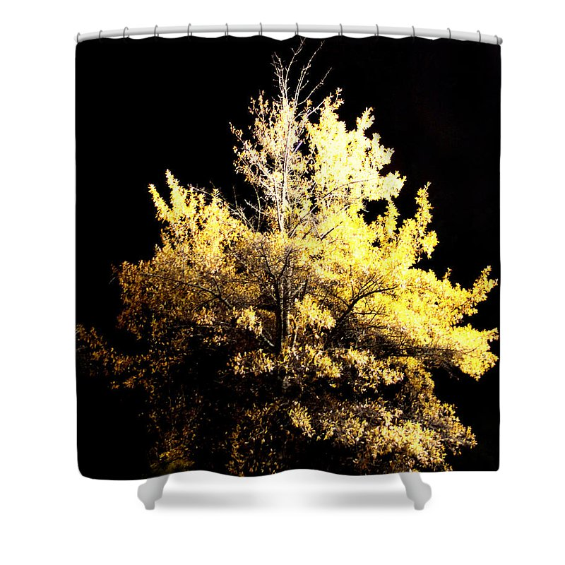 Night Shower Curtain featuring the photograph Oak At Night by Travis Truelove