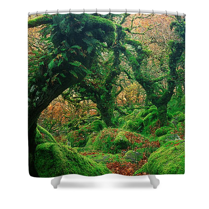 Photography Shower Curtain featuring the photograph Oak Trees In A Forest, Wistmans Wood by Panoramic Images