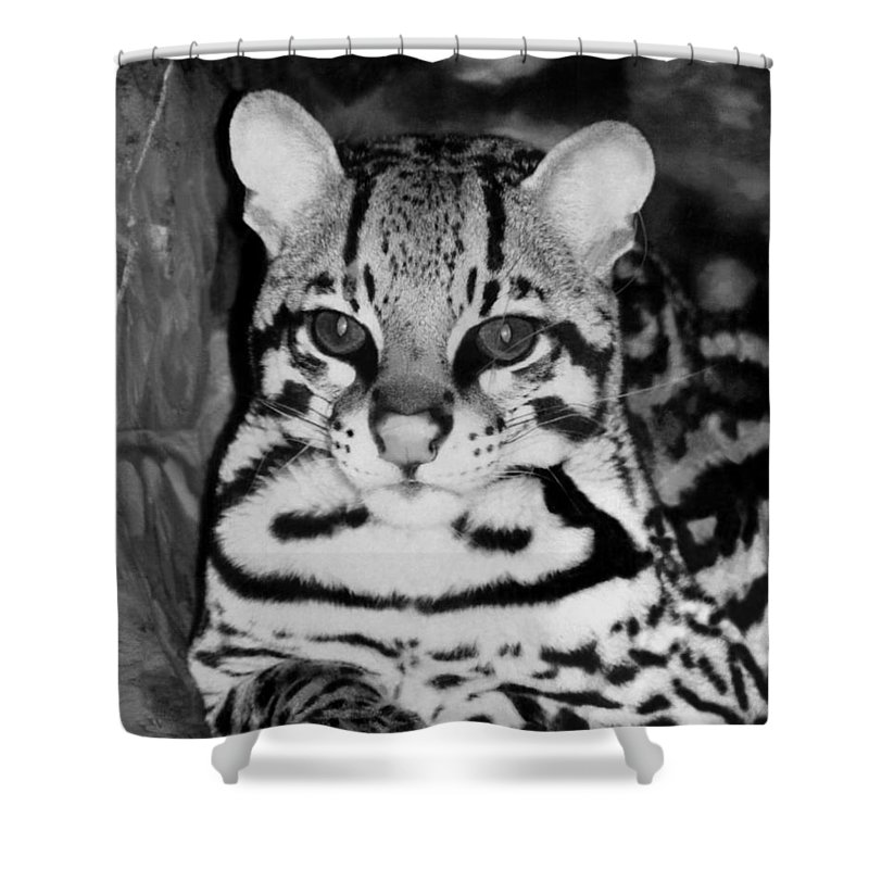 Ocelot In Repose Shower Curtain featuring the photograph Ocelot In Repose by Ellen Henneke