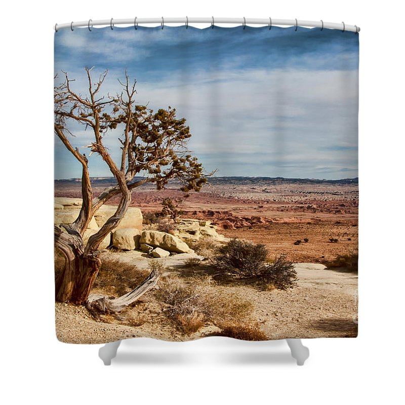 Aged Shower Curtain featuring the photograph Old Desert Cypress Struggles To Survive by Michael Flood