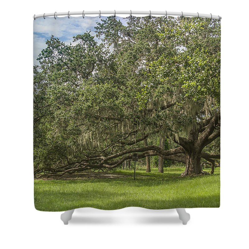Florida Shower Curtain featuring the photograph Old Oak Tree by Jane Luxton