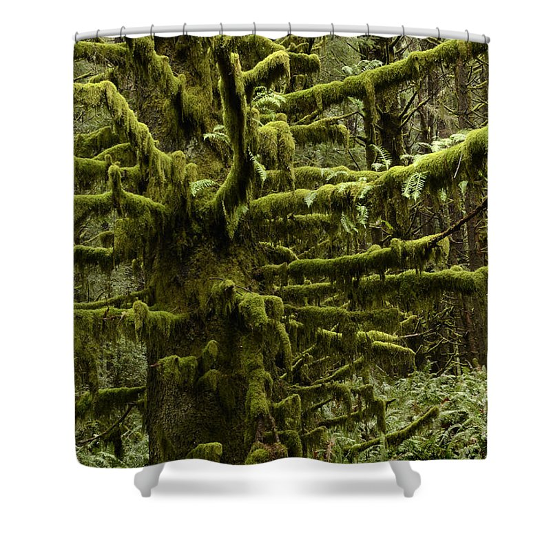 Oregon Shower Curtain featuring the photograph Old Timer by Bob Christopher