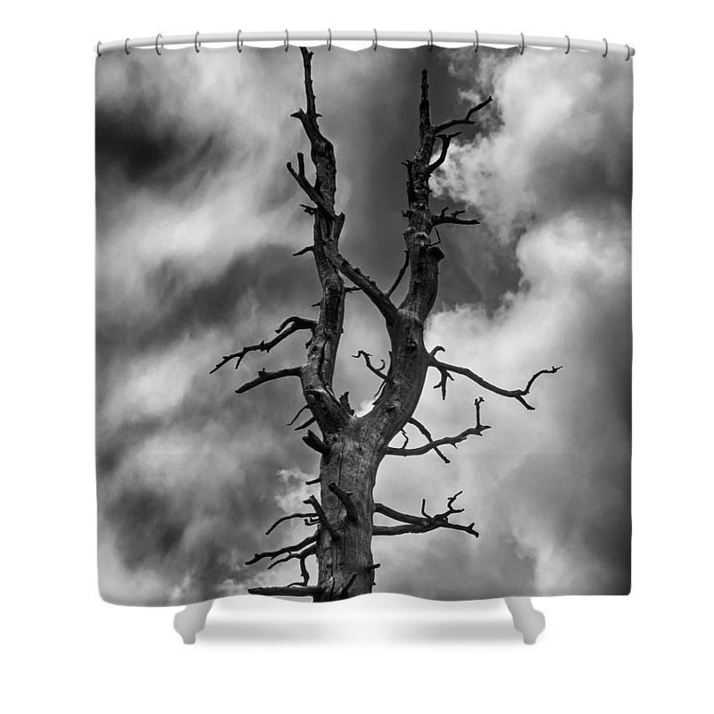 Black Shower Curtain featuring the photograph Old Trees Reach For The Sky by John Haldane