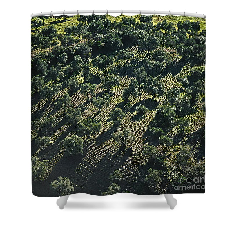 Heiko Shower Curtain featuring the photograph Olive Farmland In Spain by Heiko Koehrer-Wagner