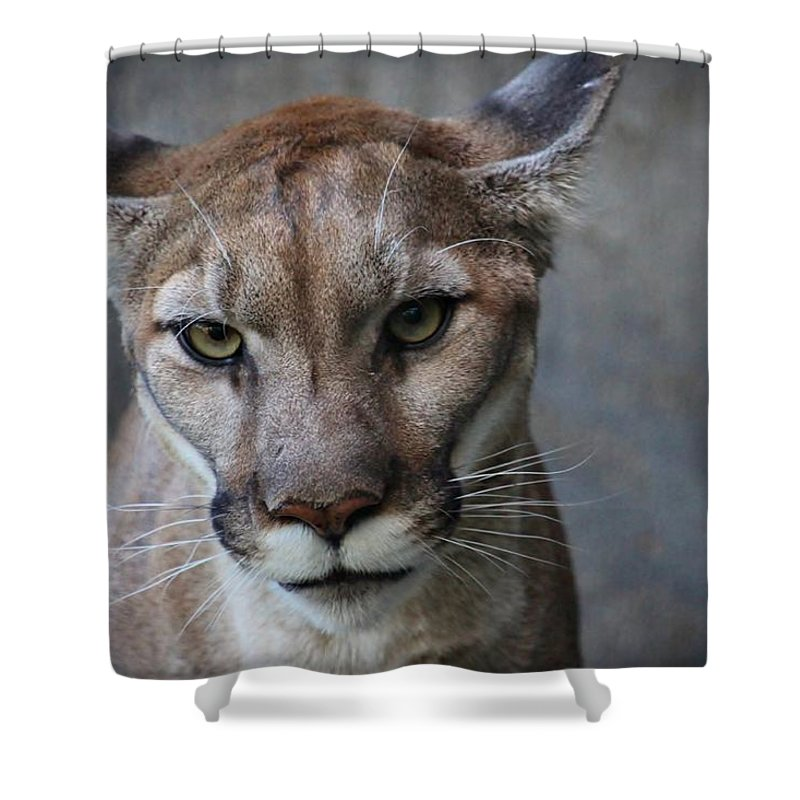 Cougar Shower Curtain featuring the photograph Olympia by Christopher Miles Carter