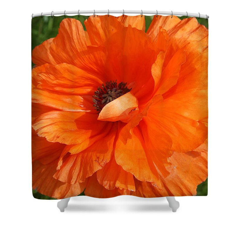 Poppy Shower Curtain featuring the photograph Olympia Orange Poppy by Christiane Schulze Art And Photography