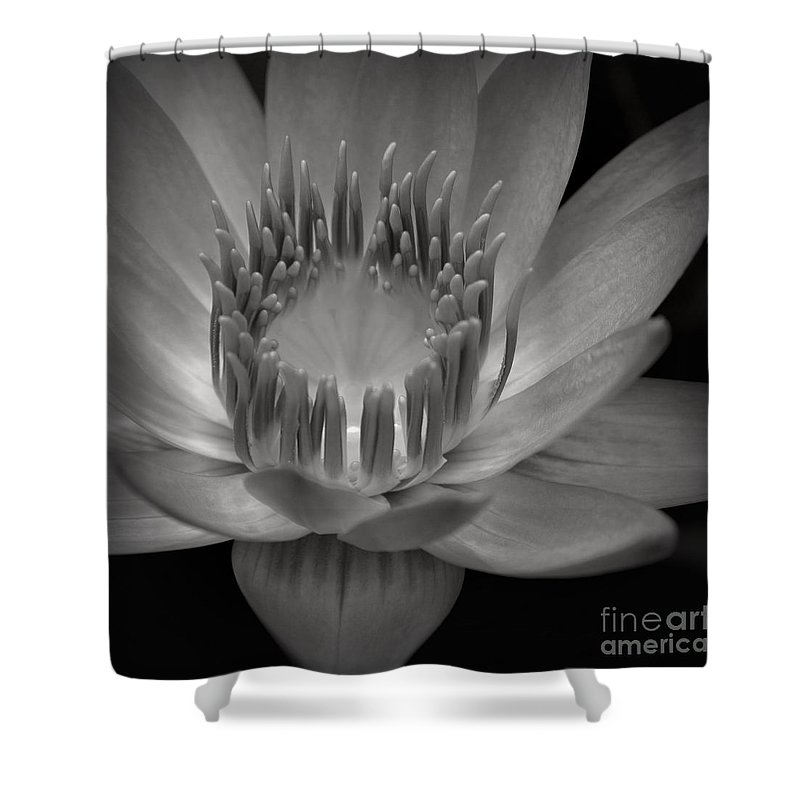 Aloha Shower Curtain featuring the photograph Om Mani Padme Hum Hail To The Jewel In The Lotus by Sharon Mau