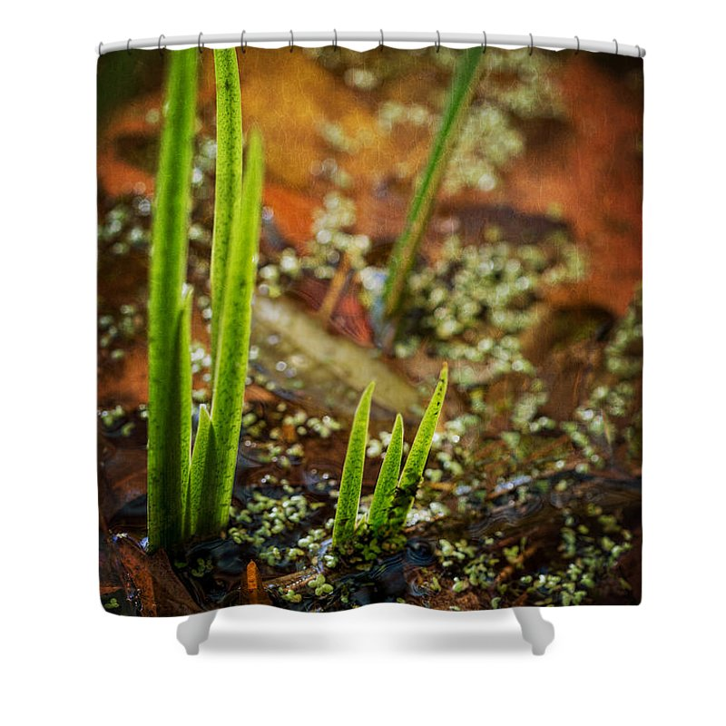 On Golden Pond Shower Curtain featuring the photograph On Golden Pond by Dale Kincaid