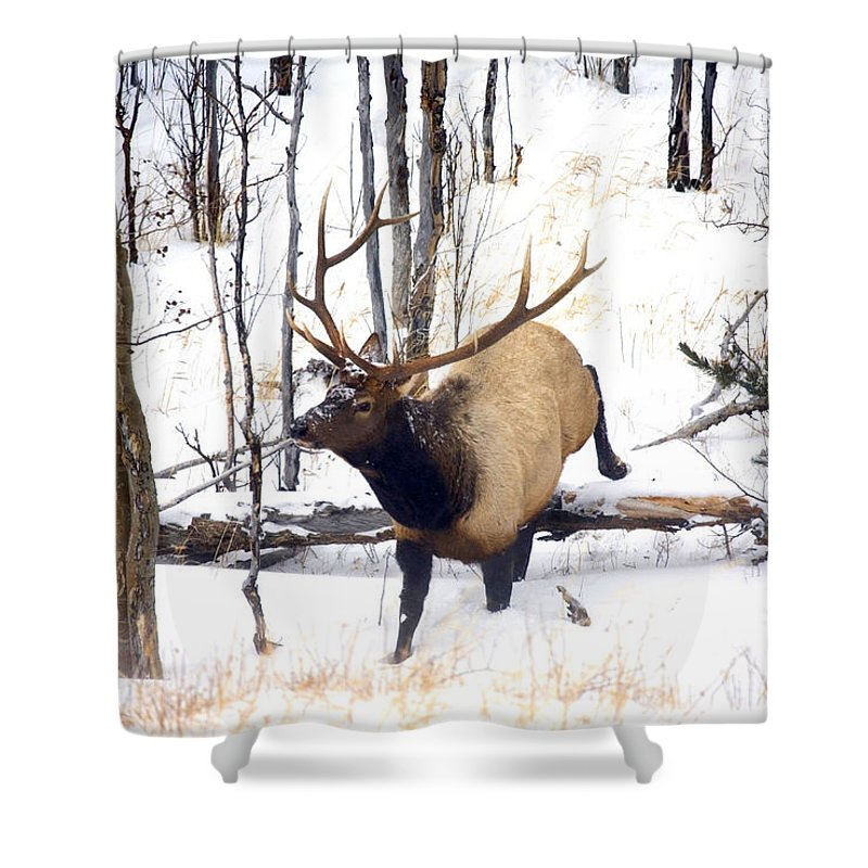 Elk Shower Curtain featuring the photograph On the Move by Mike Dawson