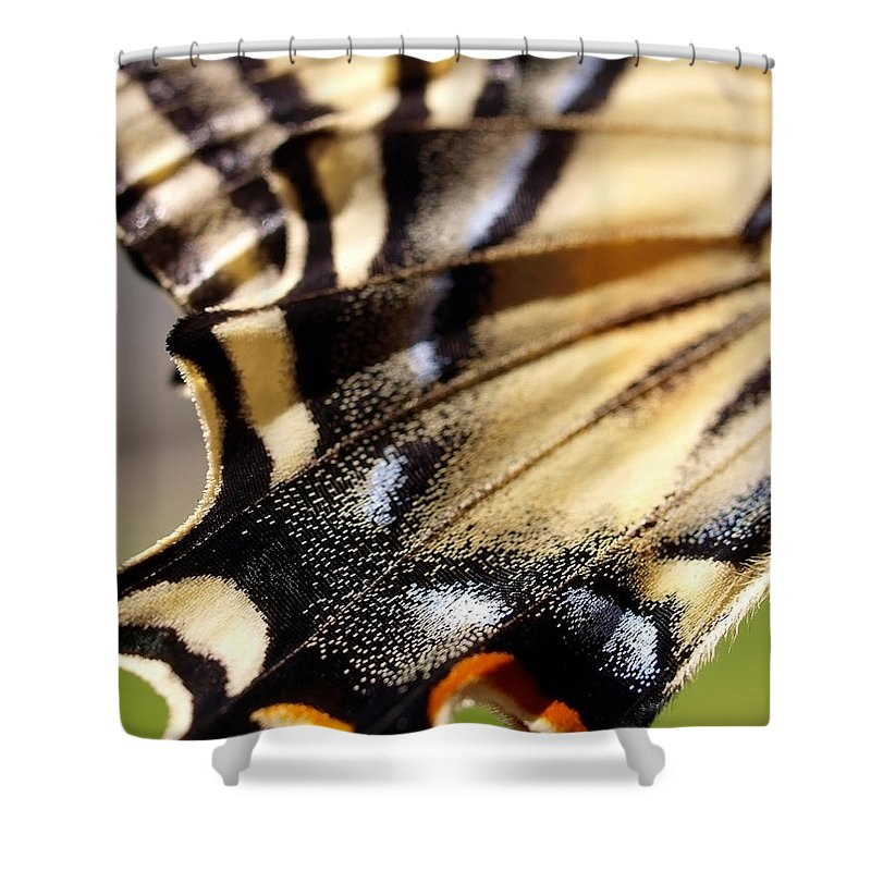 Butterfly Shower Curtain featuring the photograph On The Wing Of An Angel by Teri Schuster