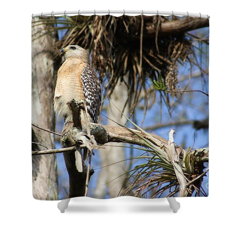 Hawk Shower Curtain featuring the photograph On Watch by Chuck Hicks