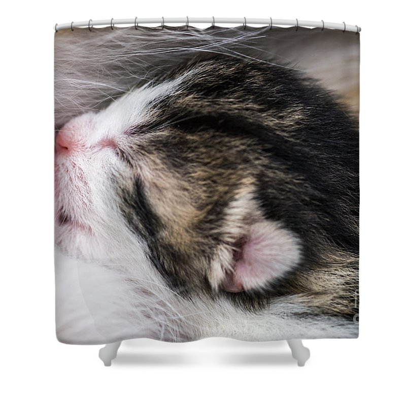 Sucking Shower Curtain featuring the photograph One Day Old Kitten Breastfeeding by Juergen Ritterbach