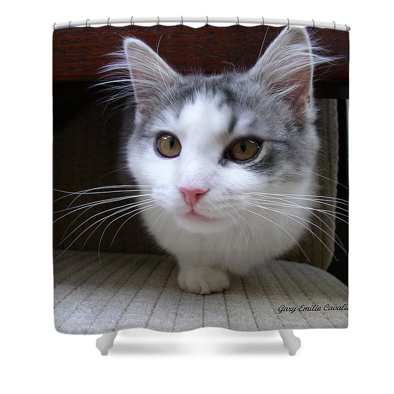 Cats Shower Curtain featuring the photograph One Legged Kitty by Gary Emilio Cavalieri