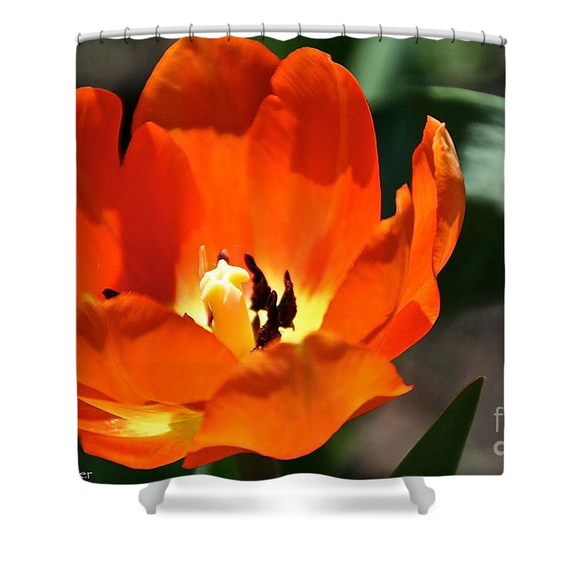 Flower Shower Curtain featuring the photograph Open Arms by Susan Herber