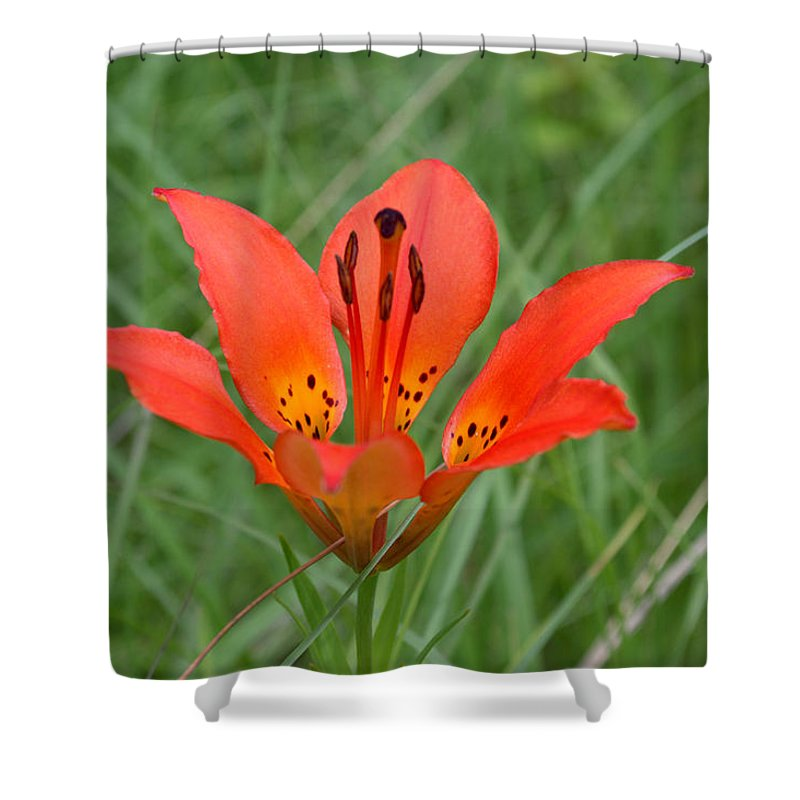 Flower Shower Curtain featuring the photograph Orange Beauty by Mark Hudon