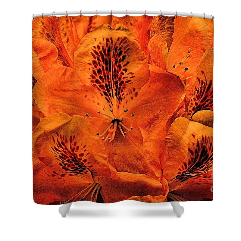 Bstract Shower Curtain featuring the photograph Orange Is In by Lauren Leigh Hunter Fine Art Photography