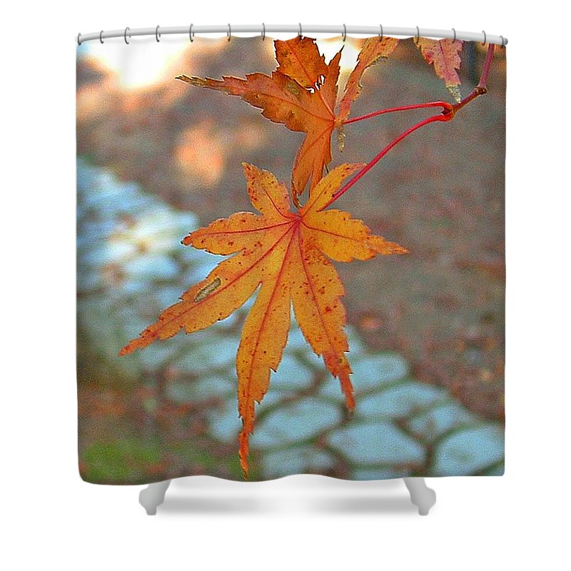 Tree Shower Curtain featuring the photograph Orange Maple Leaves by Lorna Hooper